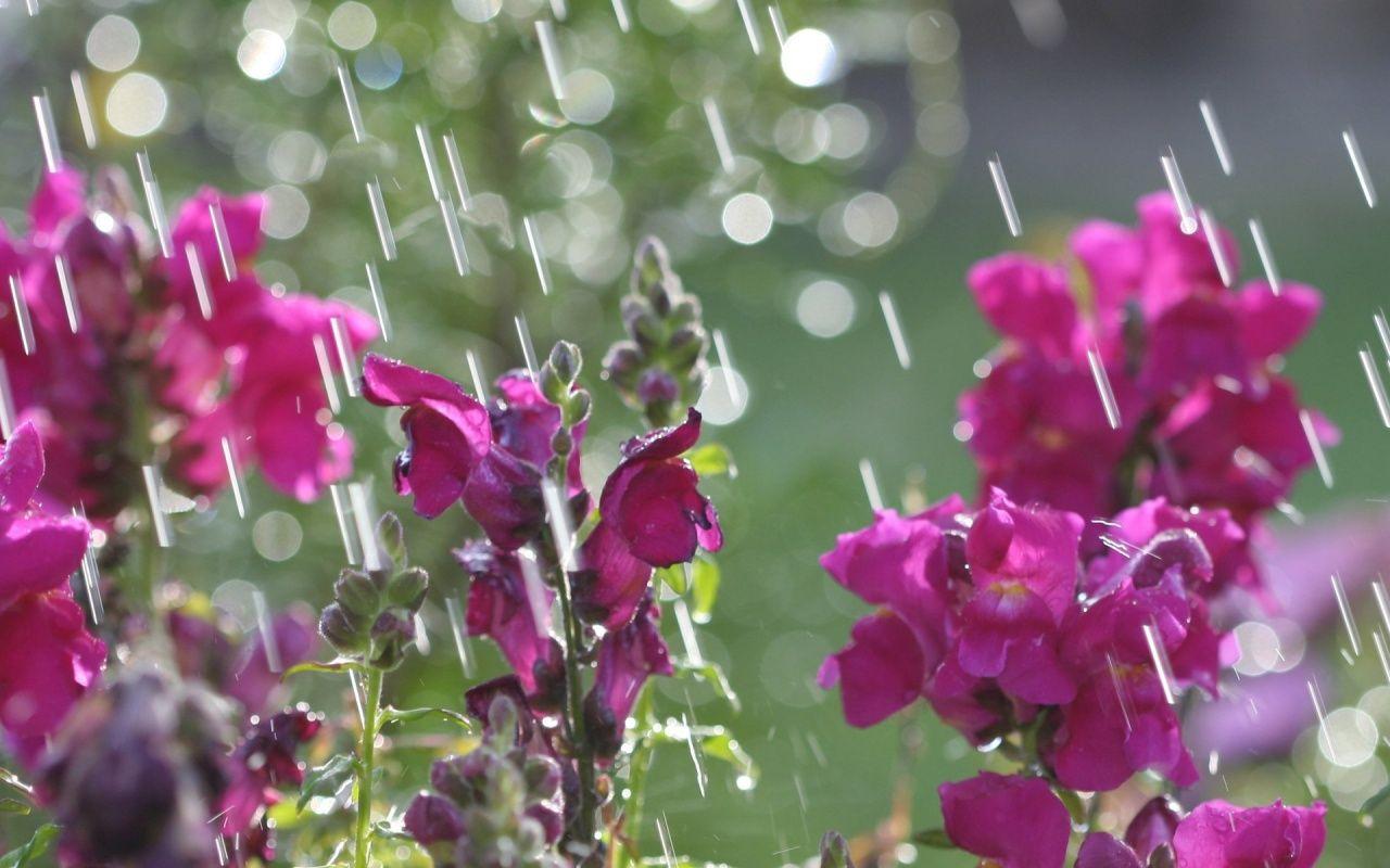 april showers April Showers 2 1280x800 wallpaper