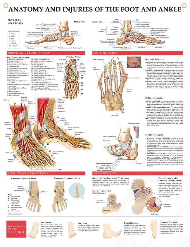 Anatomy and Injuries of the Foot and Ankle Chart 20x26 | Nursing ...