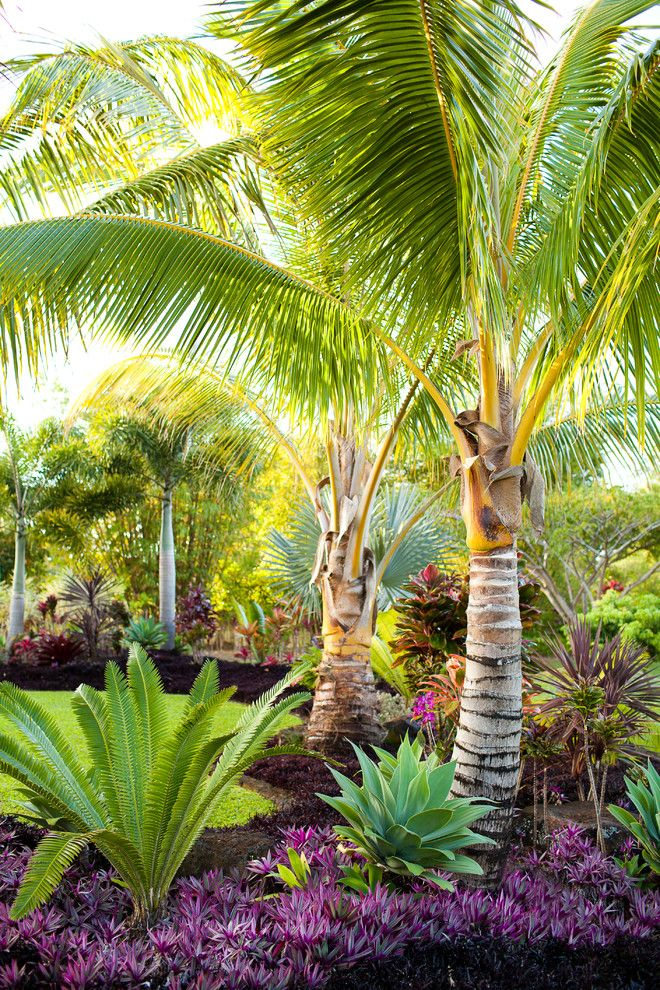 Palm Tree Bedding Landscape Mediterranean With Arch Cabana Covered Tropical Landscape Design Tropical Garden Design Palm Trees Landscaping