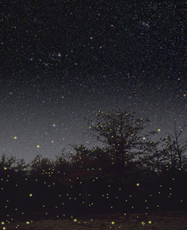 Call of the Fireflies