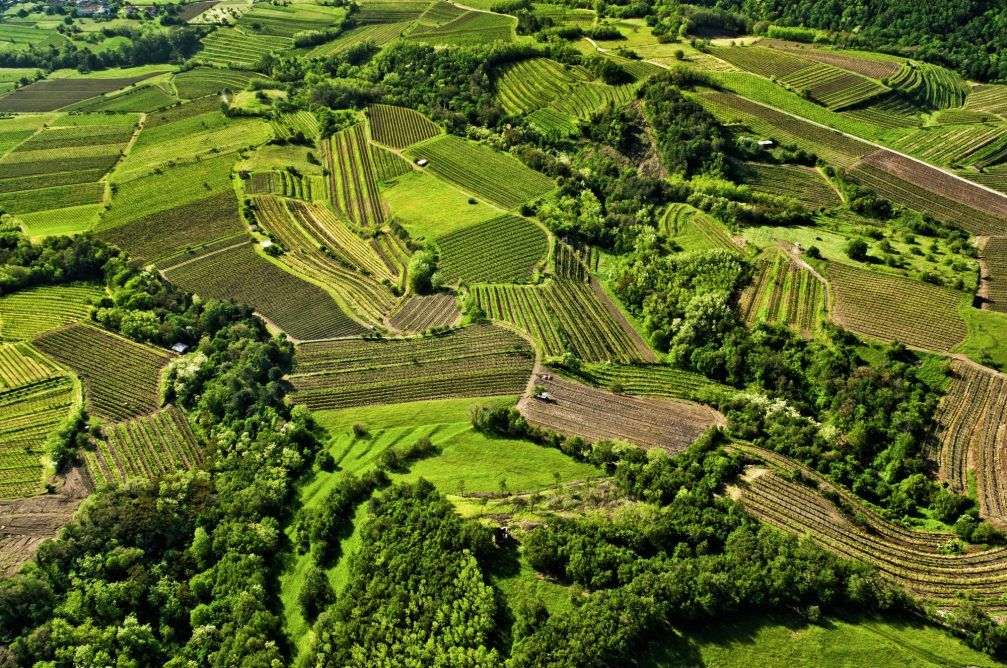 An aerial view of the vineyards in the Upper Vipava valley in