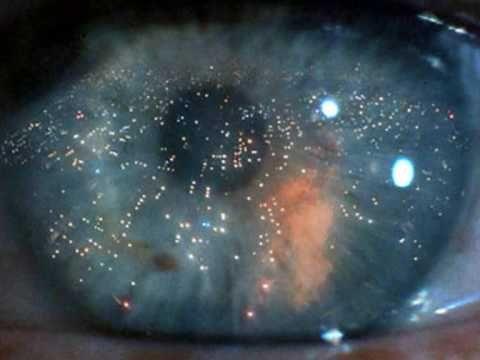 One More Kiss Dear Vangelis Blade Runner Blade Runner Runner Blade