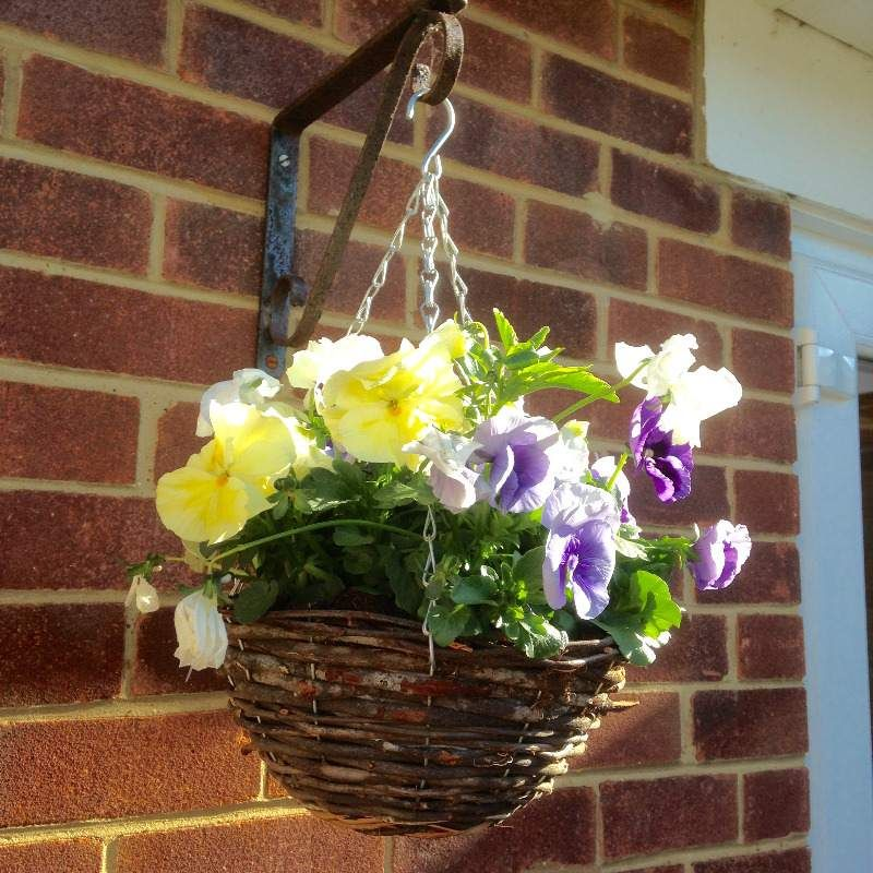 lylia rose april 2014 garden photo flowers lifestyle summer blog blogger hanging basket purple yellow