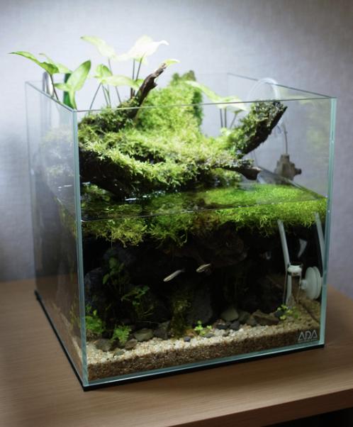 Top Mini Paludarium Ideas Aquascape Paludarium Blog Nature Aquarium Aquascape Aquarium
