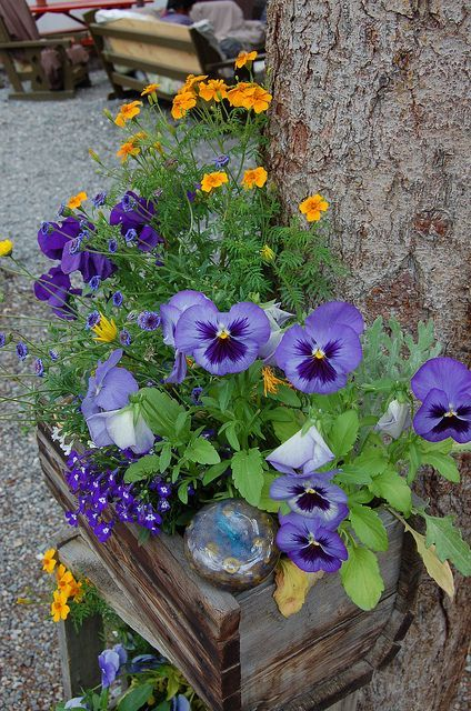 Pretty Pansies Container Flowers Flower Pots Pansies