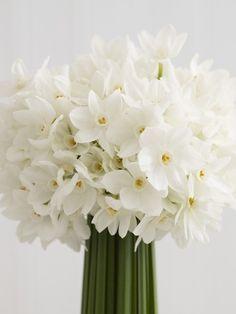 Perfumed spring narcissi