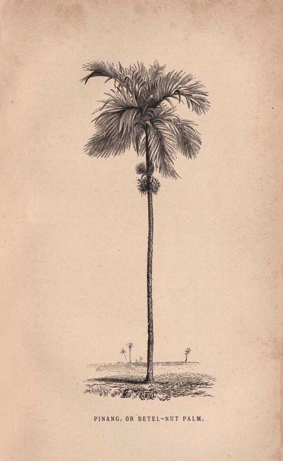 Palm Tree Botanical