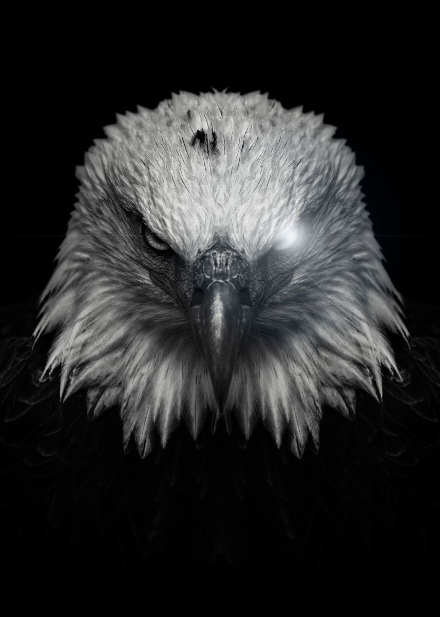 Angry Eagle Poster Poster Print By Mk Studio Displate Eagle Tattoo Eagle Pictures Eagle Wallpaper Eagle black and white hd wallpaper