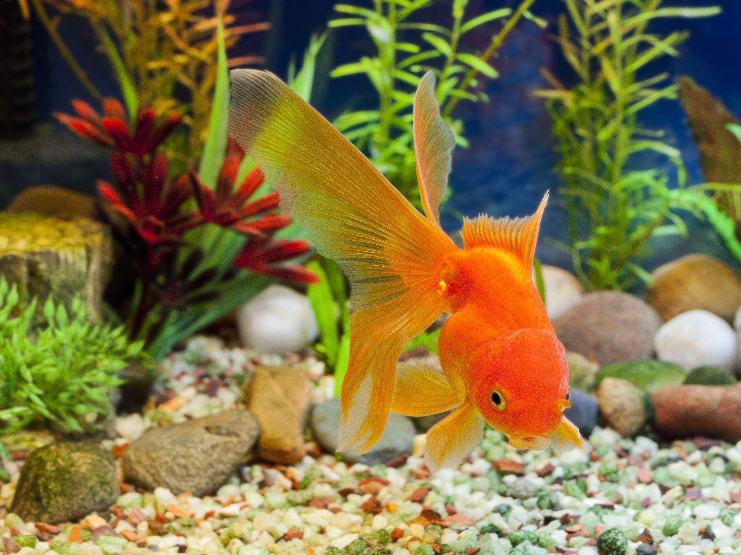 Freshwater fish tank decoration ideas luxury how to
