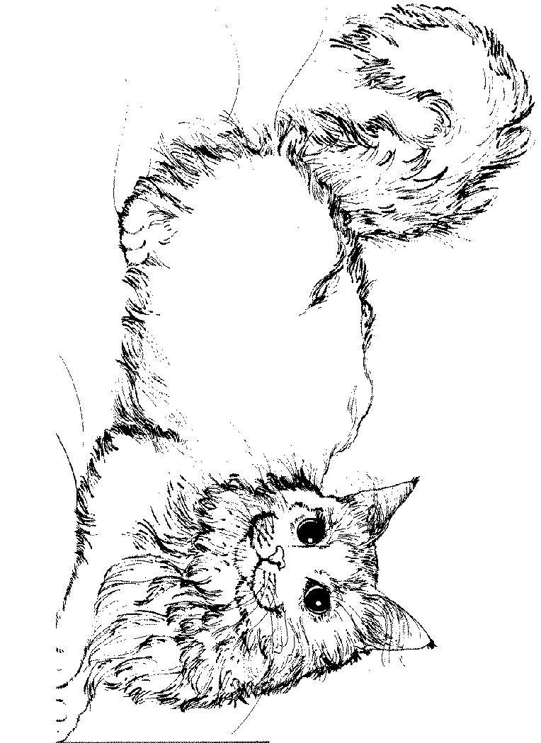 Ausmalbild Katze Kids-n-Fun | coloring 4 | Pinterest | Ausmalbilder ...