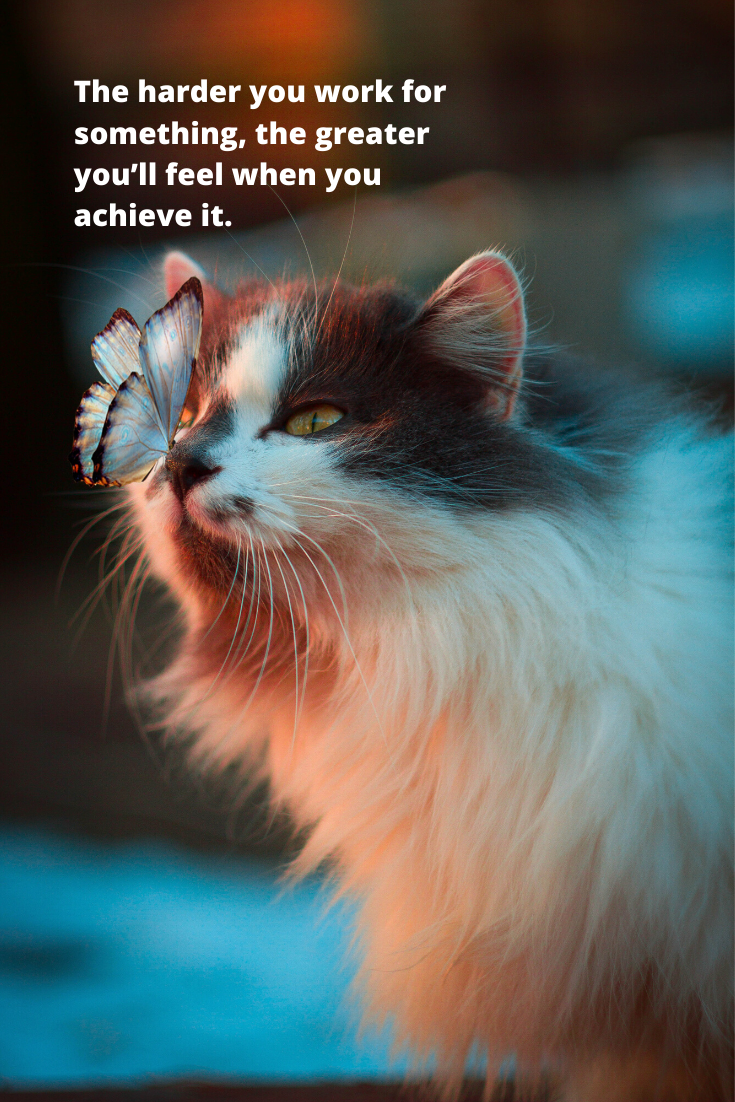 Achievement The Harder You Work For Something The Greater You Ll Feel When You Achieve It Pet Health Cats Cat Names