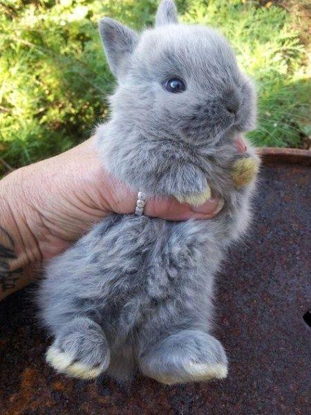 Frohliches Kaninchen Lustige Tierbabys Flauschige Tiere