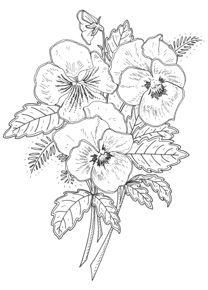 Pansy Coloring Pages Jpg 714 995 Flower Drawing Flower Drawing Design Flower Coloring Pages