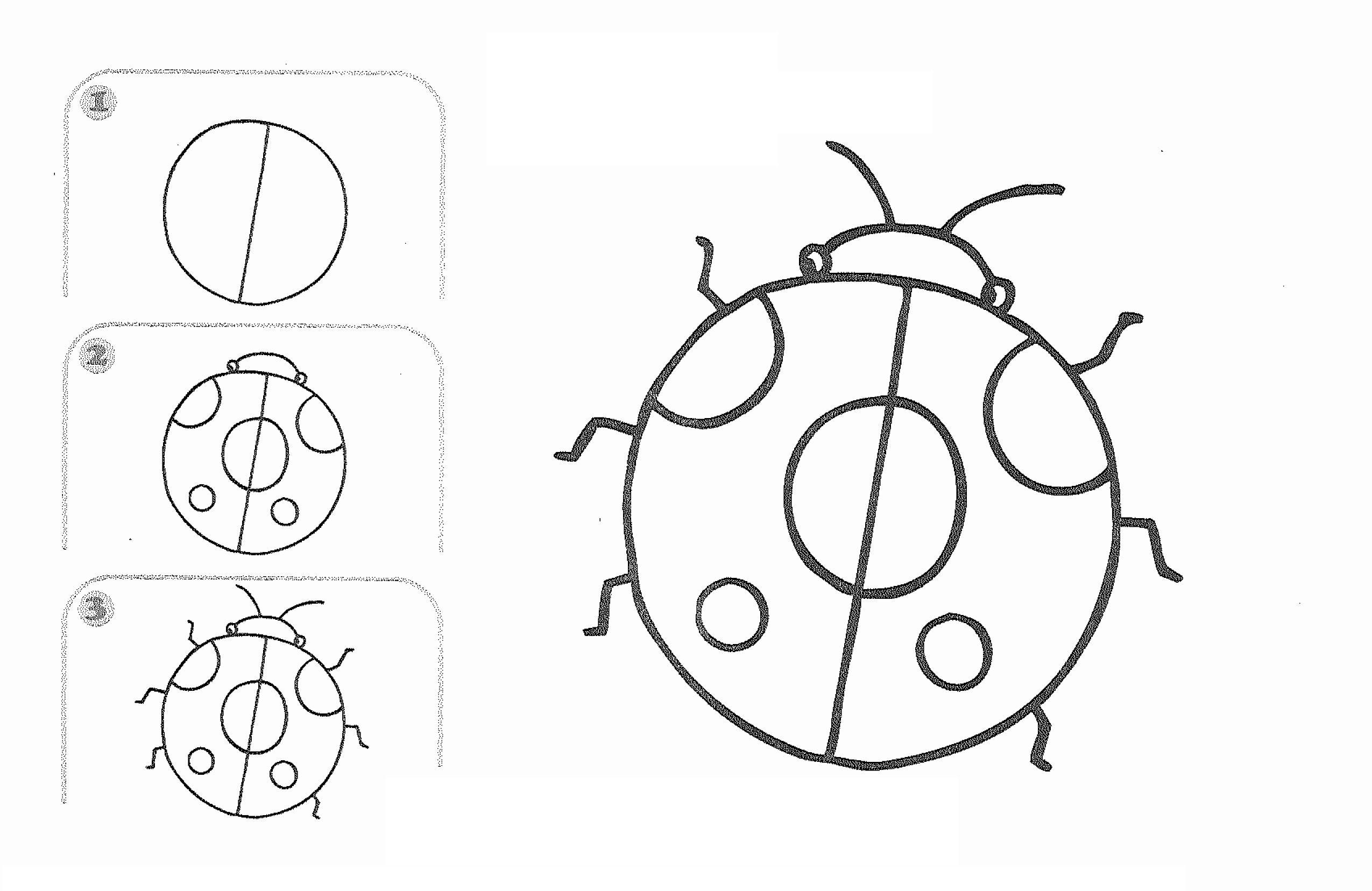 Free learn draw cartoon ladybug page,free printable kids
