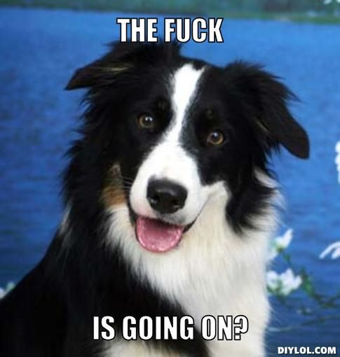 My dog's thoughts exactly majority of the time haha! #wtf #bordercollie #meme
