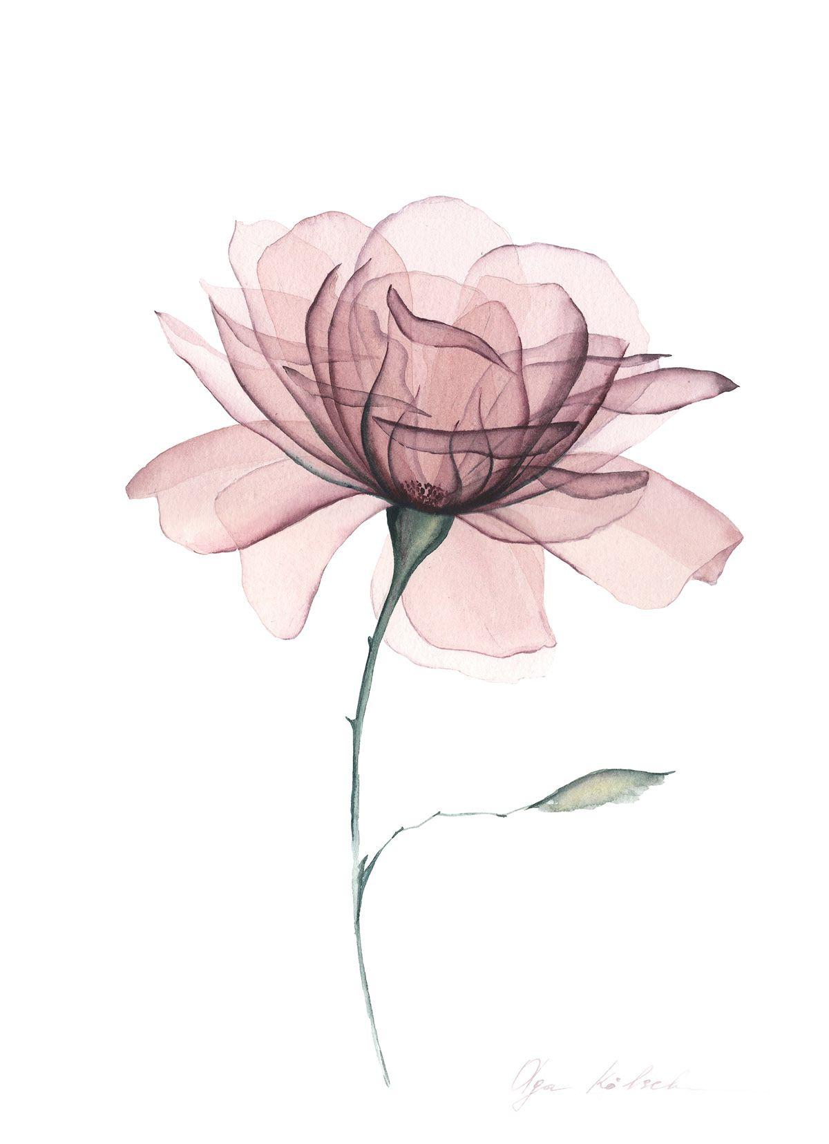 Transparent Dusty Rose