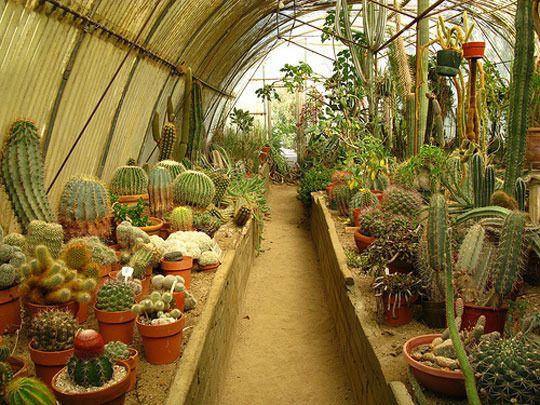 Gentil Garden Visit: The Cactarium At Moorten Botanical Garden