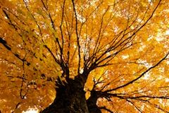 Autumn in New England | The American Road Trip Company