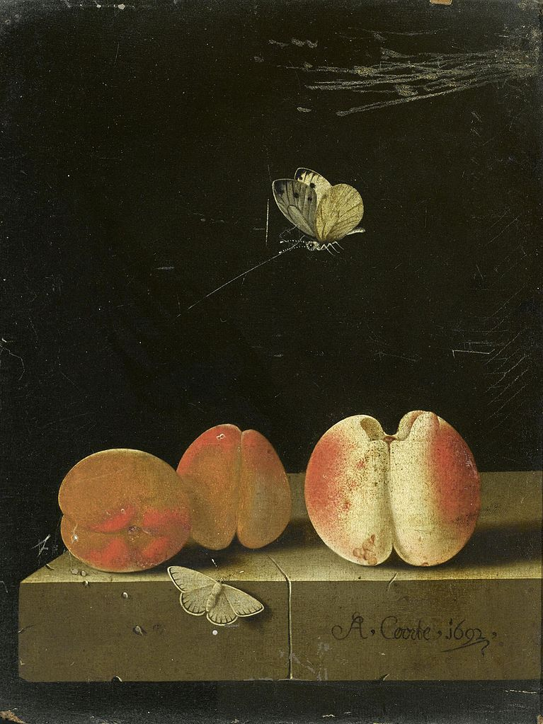 Adriaen Coorte (Dutch, ca. 1665-after 1707). Still life with peach and two apricots, 1692