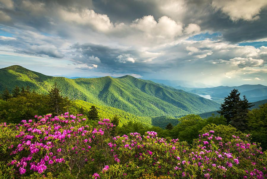 Asheville NC Blue Ridge Parkway Spring Flowers by Dave Allen