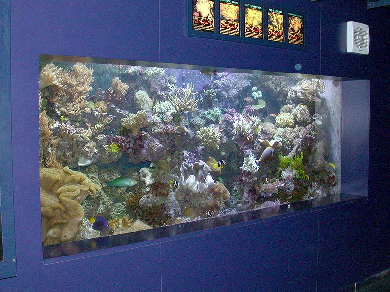 Many Times New Marine Aquarium Keepers Often Make Some Common Mistakes When Setting Up Saltwater Aquarium Beginner Saltwater Aquarium Setup Saltwater Aquarium