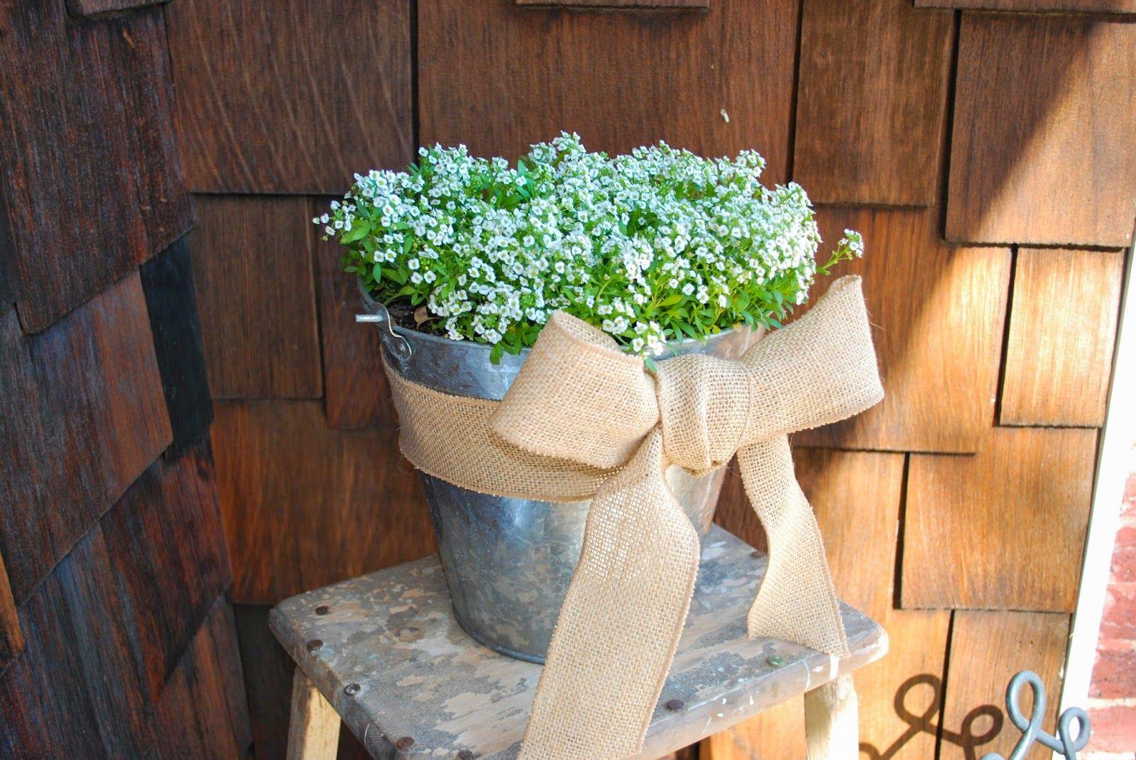 Potted spring flowers diy floral pinterest spring flowers potted spring flowers diy mightylinksfo
