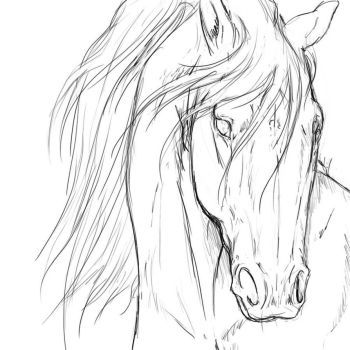 DeviantArt: More Collections Like Friesian Horse by ReQuay