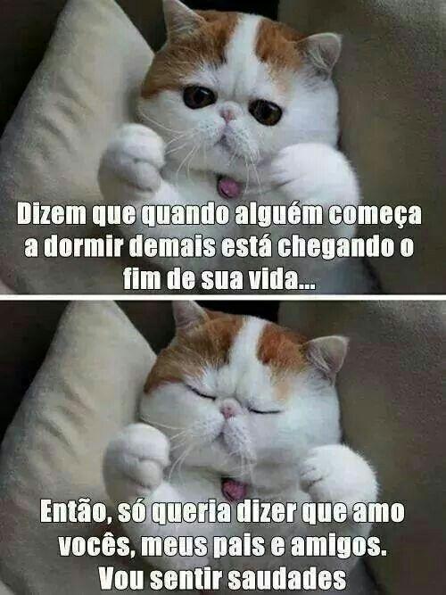 Amo Gato E Mentira Engraçados Pinterest Engraçado Rir E Gatos