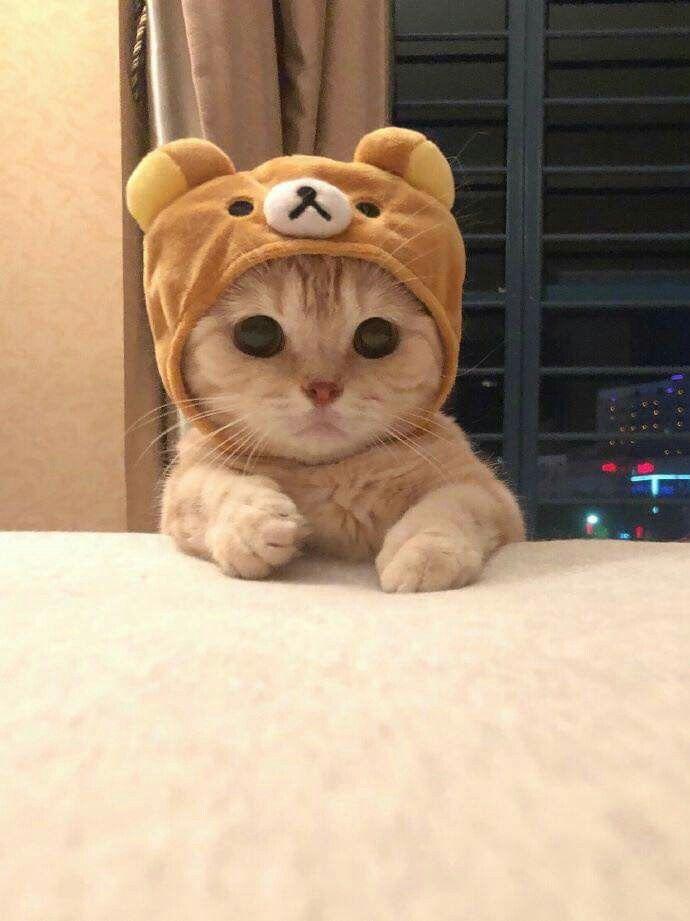 Pin Von Merve Auf Susse Tiere Susse Katzen Bilder Niedliche