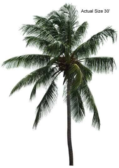 Single palm tree pictures - anti-fascism wallpapers free
