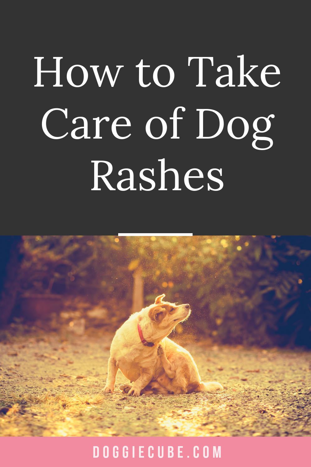 How To Take Care Of Dog Rashes Dog rash, Dogs, Dog care