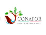 Periodismo sin Censura: CONAFOR inaugurará dos Huertos-Semillero Clonales ...