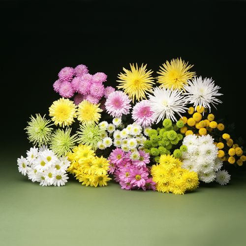Pin By Bakanas Flowers On Chrysanthemums Floral Centerpieces Flowers Floral