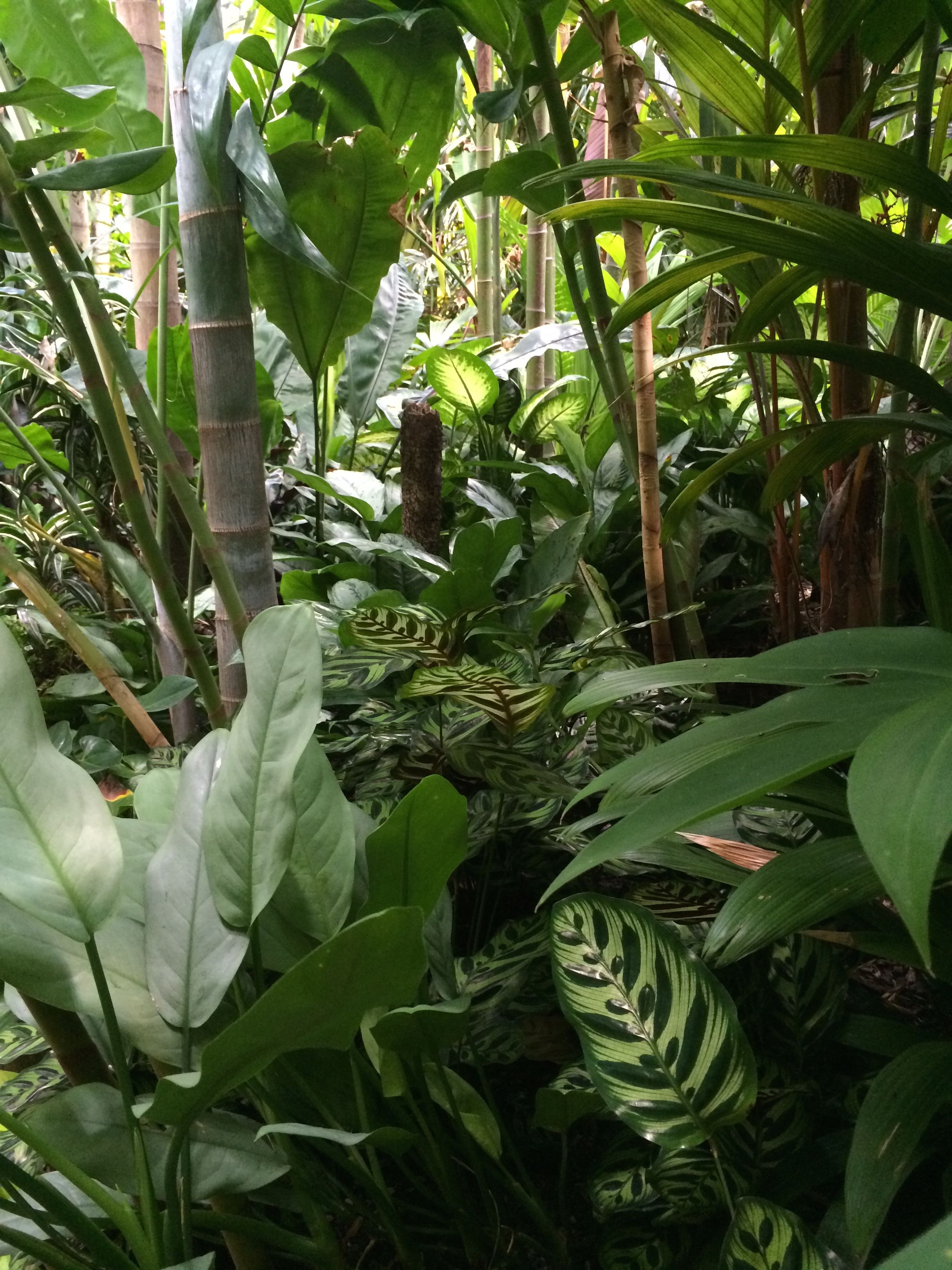 tropical garden texture and placement gardening