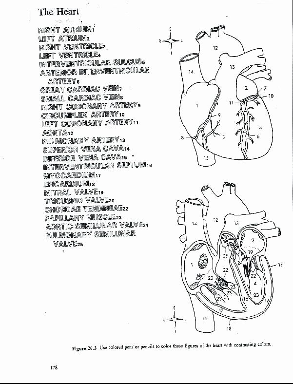 Human Heart Coloring Worksheet Human Heart Coloring Pages Clo2genfo In 2020 Anatomy Coloring Book Heart Coloring Pages Color Worksheets