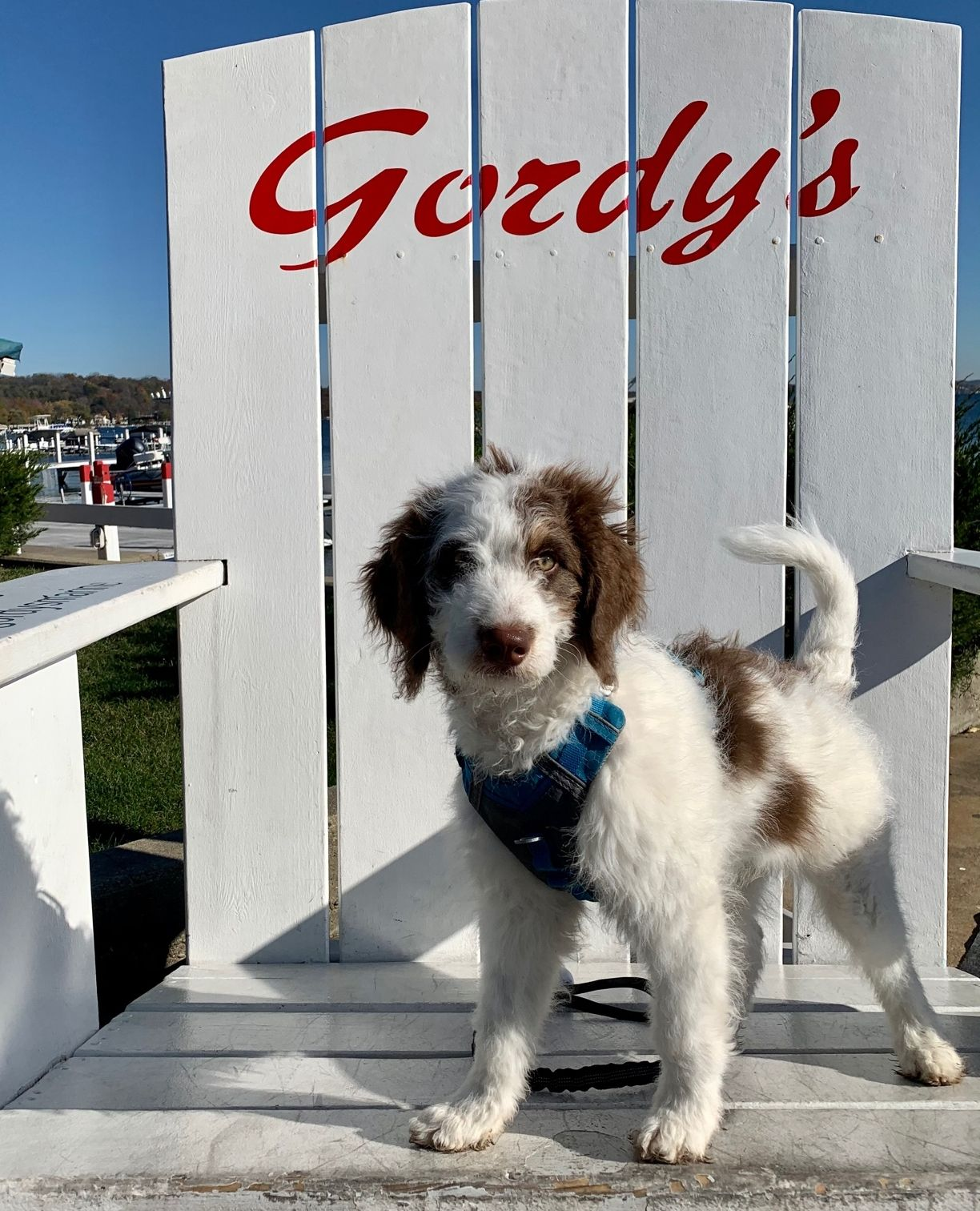 Ziggy says Happy #SundayFunday . #gordyslife #dogsofinsta #lakelife #puppies #gordysbigchair