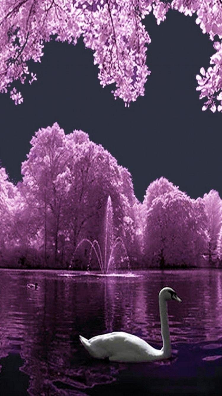 Nature is Always Beautiful iPhone 6 wallpaper - Birds iPhone 6 Wallpapers #Nature #iPhone #6 # ...