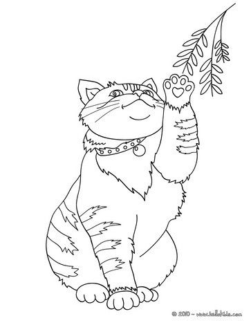 Superb Cute Cat Coloring Page