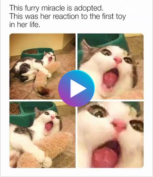 Funny Memes To Cheer You Up On A Bad Day Cute Animal Memes Funny Animal Memes Funny Cat Memes