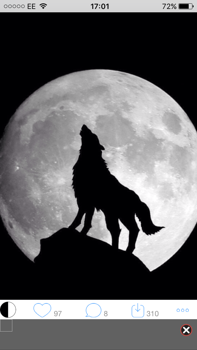 Pin By Kirsten Cook On Animals Wolf Wallpaper Wolf Artwork Wolf Howling