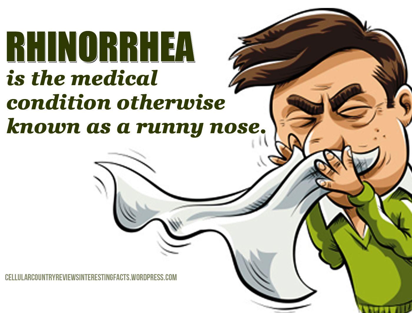 Rhinorrhea Runny Nose Mucus Nasal Cavity