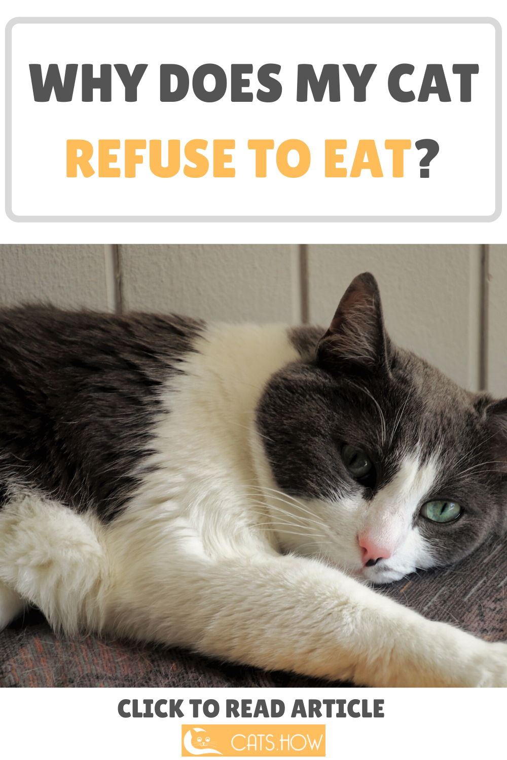 How Long Can Cats Go Without Food Cat care, Cats