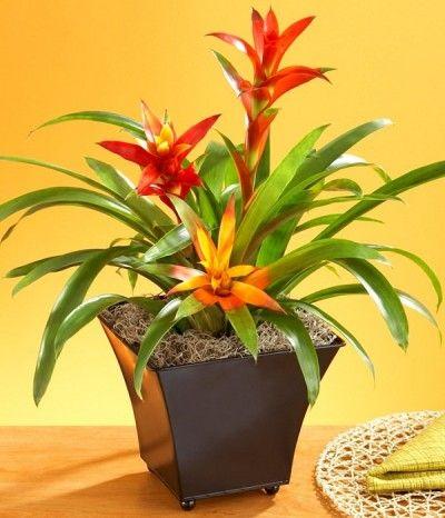 Las 17 mejores plantas de interior mejores plantas de - Las mejores plantas de interior ...