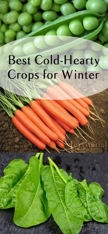 The easiest crops to grow this winter.