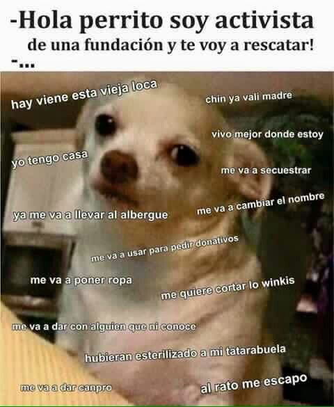 Hola Perrito Soy Activista Perro Enojado Memes Memes Divertidos
