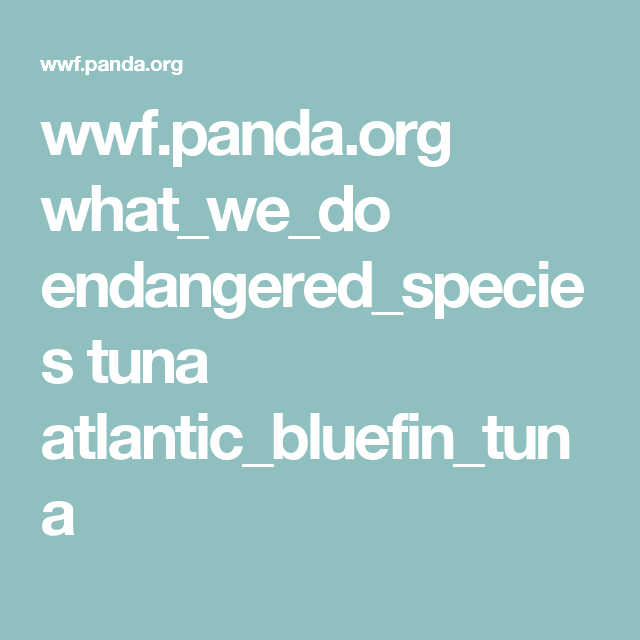 wwf.panda.org what_we_do endangered_species tuna ... on aspca panda, giant panda, biggest panda, japan panda, anime panda, animals panda, funny panda, cartoon panda, national wildlife federation panda, red panda, weed panda, huge panda, world wildlife fund panda, baby panda, wtf panda, african panda, enjoi panda, very cute panda, sad panda, bubble panda,