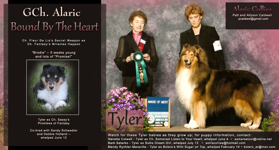 Alaric Collies Gch Alaric Bound By The Heart With Images Collie