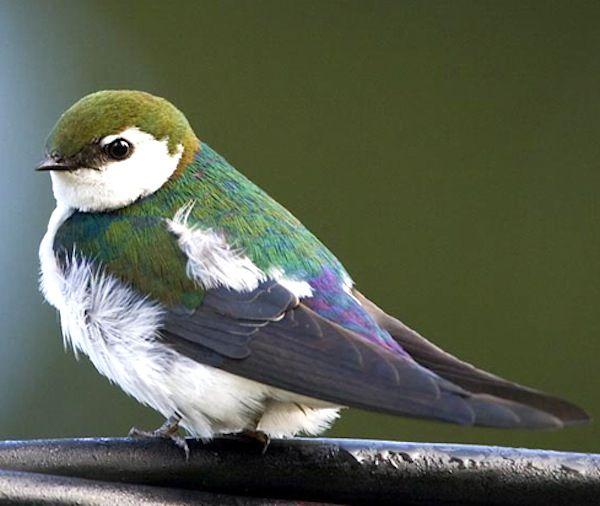 Alpine Daily Planet Common Birds Bird Species Birds