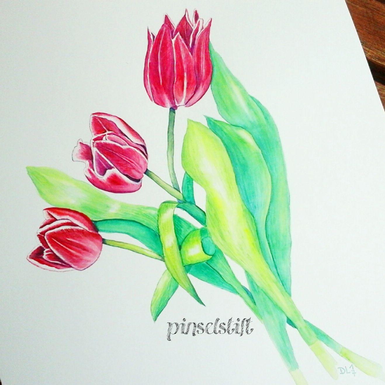 Blumenportrait Tulpen Illustration Blume Blumen Zeichnung Und