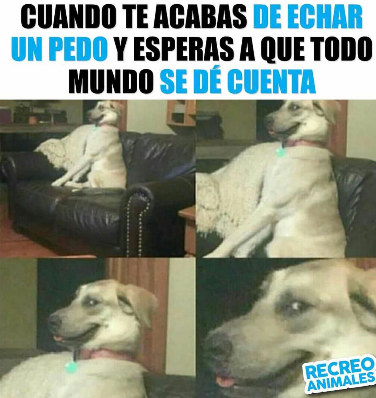 Pin By Julietavn Daiana On Memes Dog Memes Clean Funny Spanish Memes Funny Video Memes